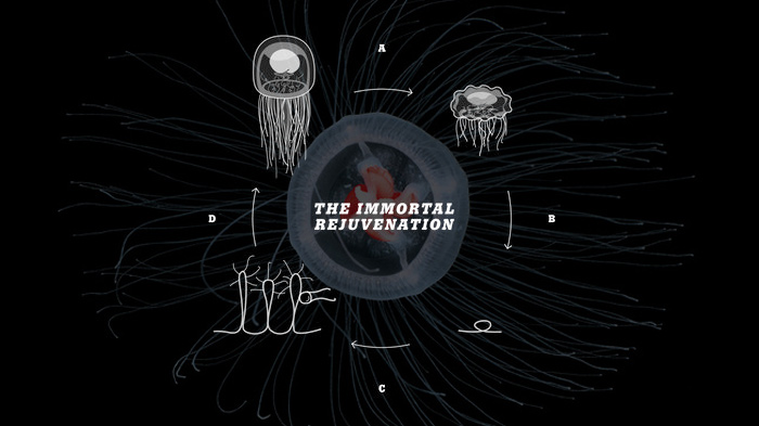 immortal jellyfish choice image