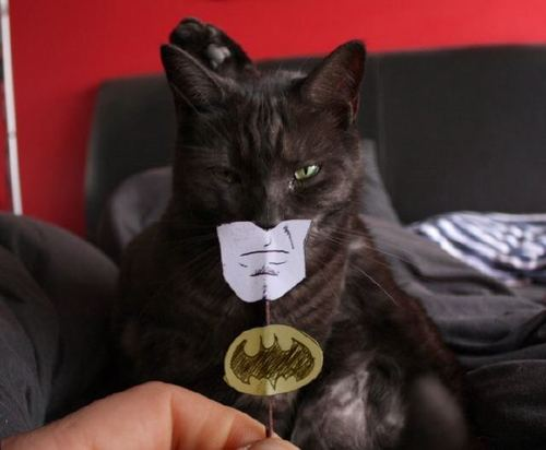 cat_batman_lrg.jpg